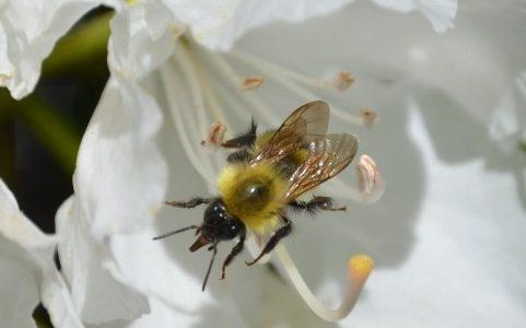 ミツバチってなに?(プラトン『メノン』より)